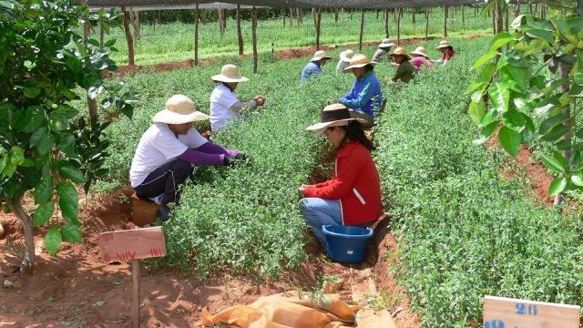 Resultado de imagen para agricultura campesina