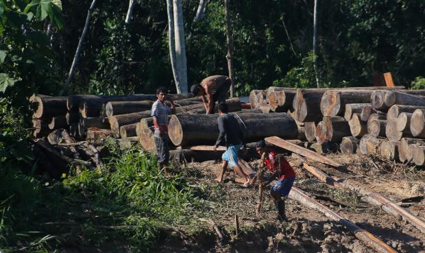 Perú desforesta la Amazonía