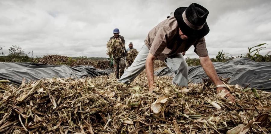 transgenic-crops-ministerio-brasileno